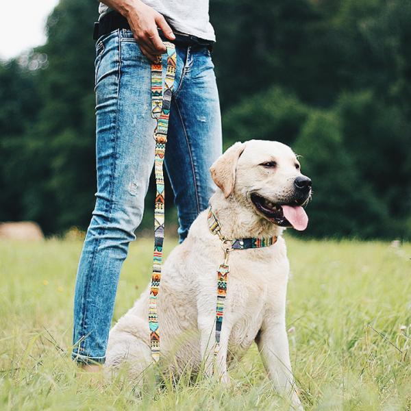 muster halsband hundeleine inka gemustert