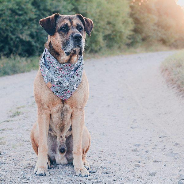 ikarusdoodle halstuch für hunde