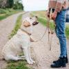 Kletterseil Hundeleine & halsband