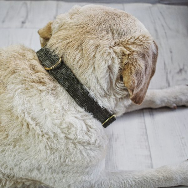 tau-halsband-hund-olive-hunde
