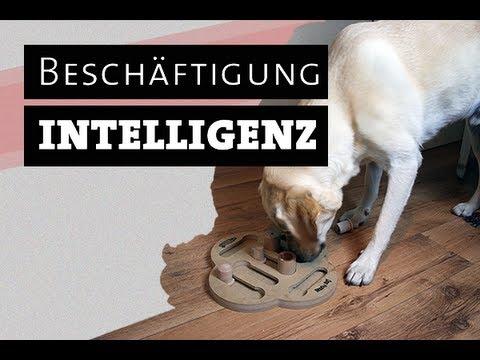 intelligenzspielzeug f r hunde selber machen hundespielzeug besch ftigen besch ftigung. Black Bedroom Furniture Sets. Home Design Ideas