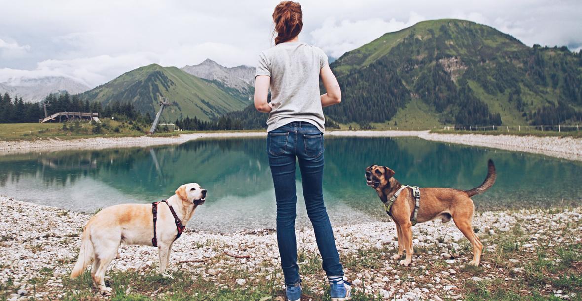 ikarusdoodle hundekanal hundeblog